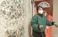 Mold Removal Miami
