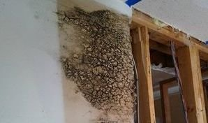 Mold Infestation From Water Damage in Wall